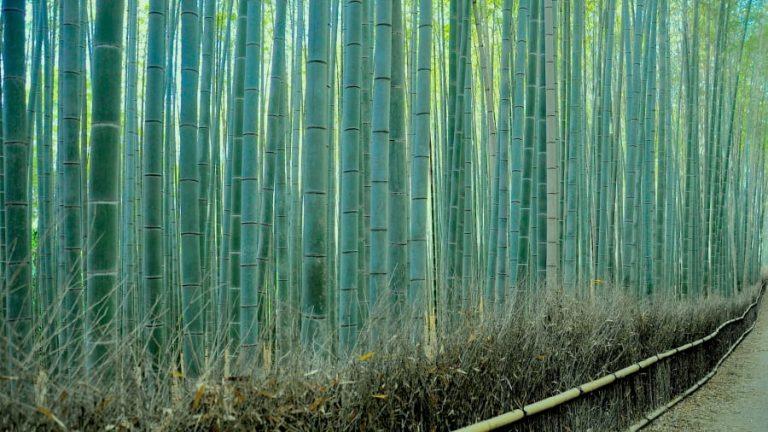 http---cdn.cnn.com-cnnnext-dam-assets-140808093127-4-sagano-bamboo-forest