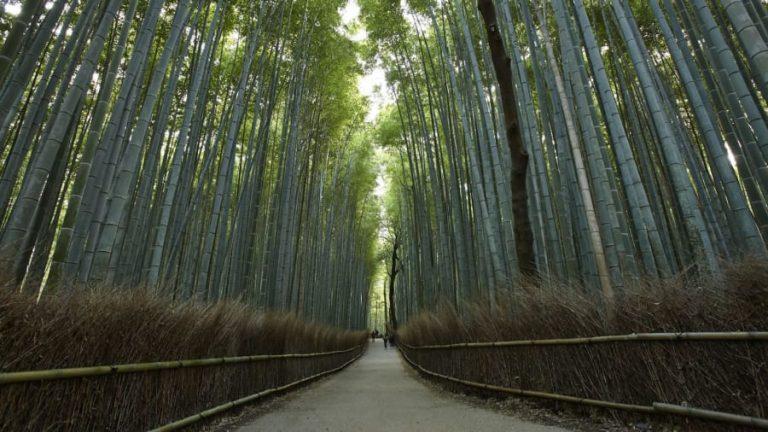 http---cdn.cnn.com-cnnnext-dam-assets-191106113846-sagano-bamboo-forest-2