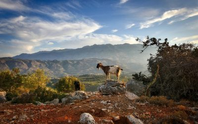 Crete (2)