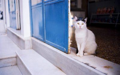 cat-3439500_1920